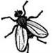 Avatar moscar
